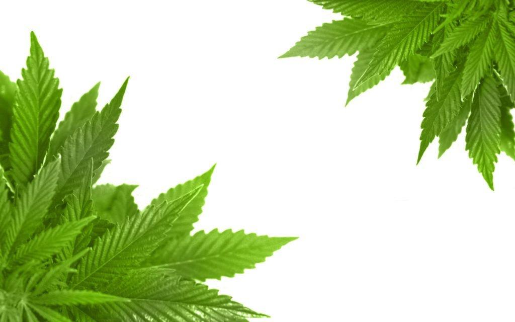 cannabis-contact