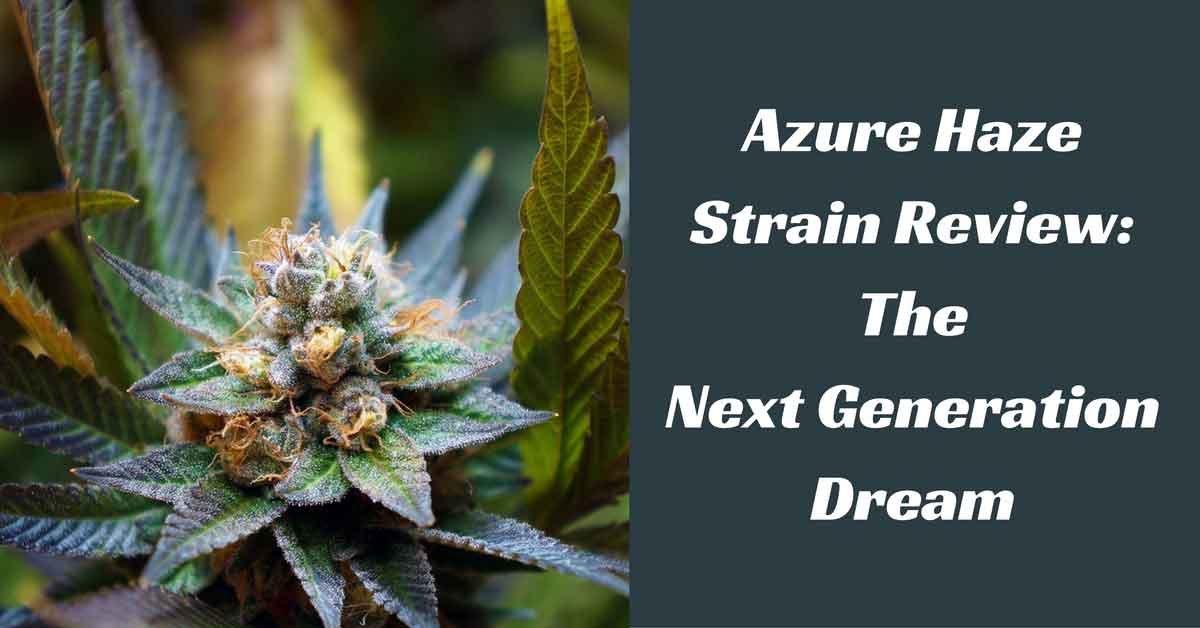 Azure-Haze-Strain