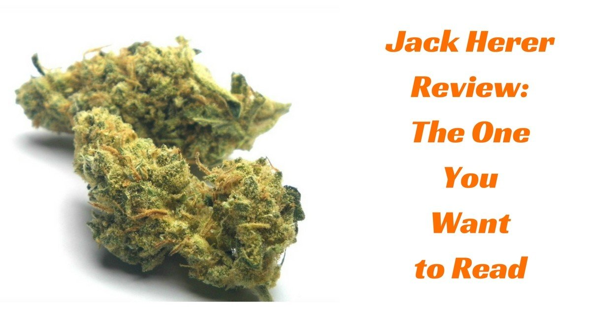 jack-herer-review-you-want-to-read
