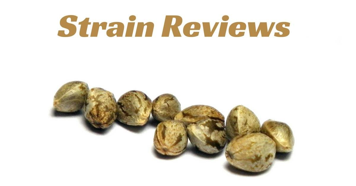 feature strain review image with marijuana seeds