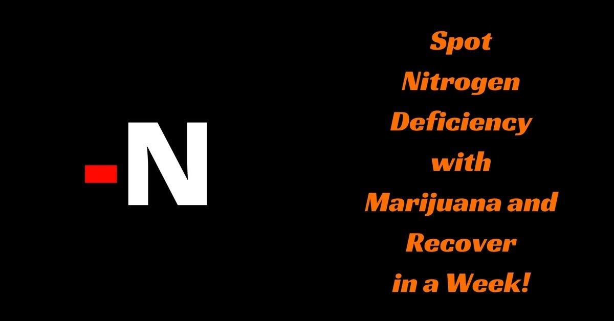 Nitrogen-deficiency-marijuana recover
