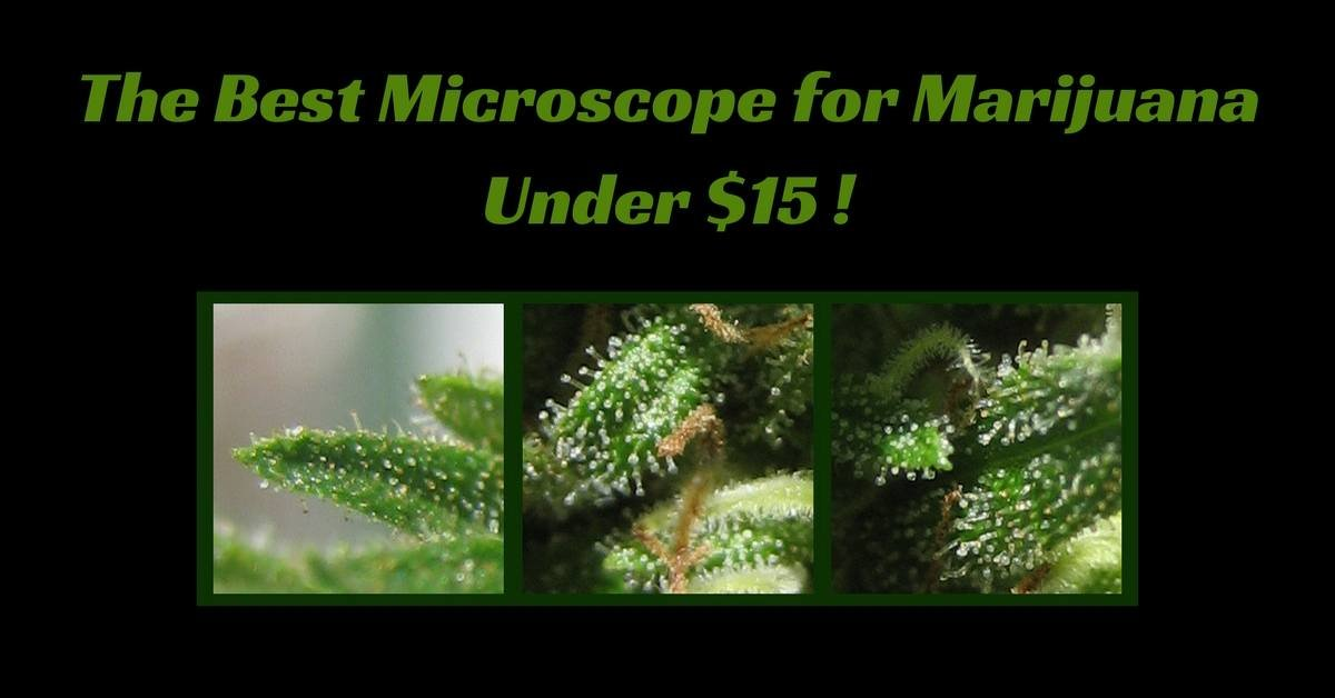 microscope marijuana under $15