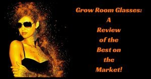 grow-room-glasses_reviews