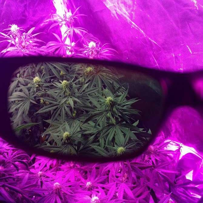 grow-room-glasses-led-