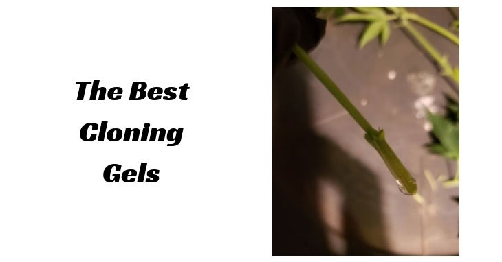 best-cloning-gels-cannabis